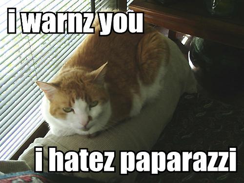 ---LOLcats--- - Page 4 I-warnz-you-i-hatez-paparazzi