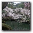 Japan - Kanazawa. Kenroku-en Garden.